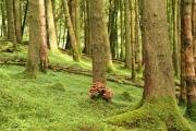 moss_mushrooms