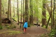 hiking_big_woods