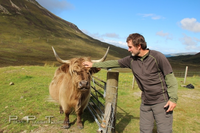 petting_highlander_cow