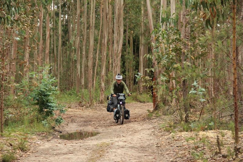 ron_eucalyptus
