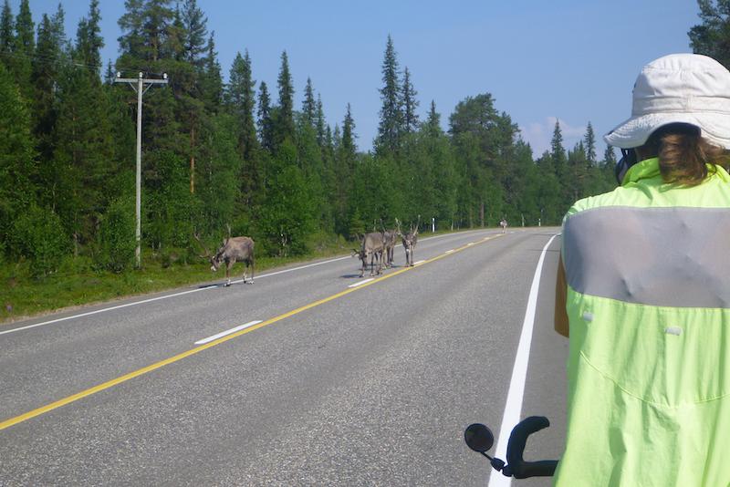 bicycle touring lapland