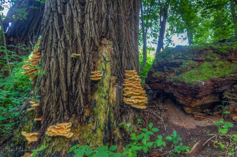 nea_tree_mushrooms_photomatix