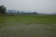 Working the rice fields along the Ho Chi Minh Trail
