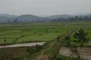 Biking past rice patties