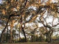 conner_preserve_campsite_oaktrees