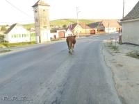 romania_cow_street