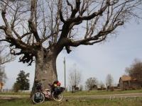 petra_bike_big_oak_color