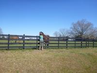 petra_horse_petting