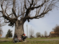petra_bike_big_oak_color