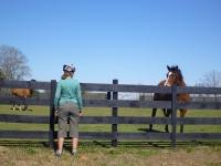 petra_horse
