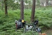 pangea_woods