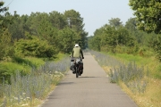 ron_bikepath_flowers