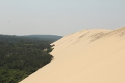 dune_forest_view