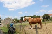 ron_horse