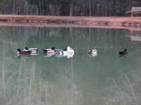 ducks_pineridge_campground