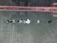 ducks_pineridge_campground