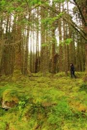 ute_woods