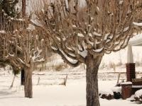 cool_tree