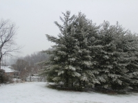 snow_trees_troutville_va
