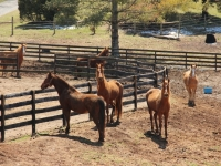 horses_standing