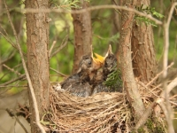 birds_campsite