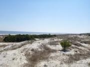 dunes_jekyll_island