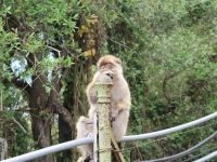 ape_sitting_gate