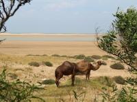 camels_beach-copy