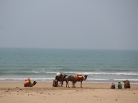 camel_tourist_beach-copy