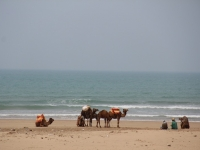 camel_tourist_beach-copy