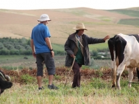 ron_farmer_cow