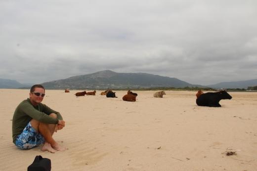 ron_beach_cows