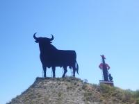 bull_man_billboard