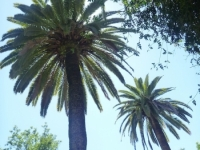 seville_laying_under_palms