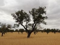 plains_tree